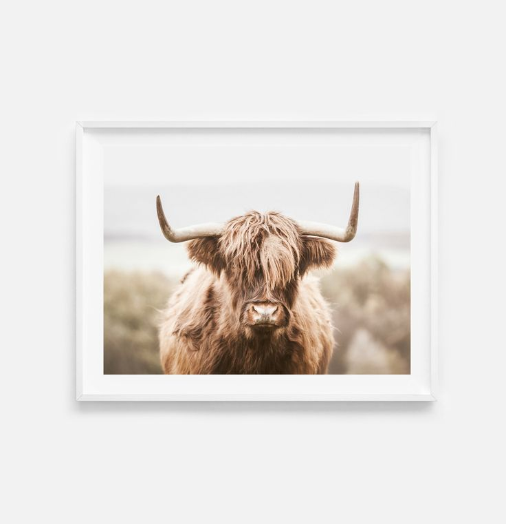 Highland Cow Print Digital Download Farm Animal Print Highland Cow Wall Art Farmhouse Wall Art Highland Cow Poster Instant Download In 2021 Highland Cow Print Cow Wall Art Farmhouse Wall Art