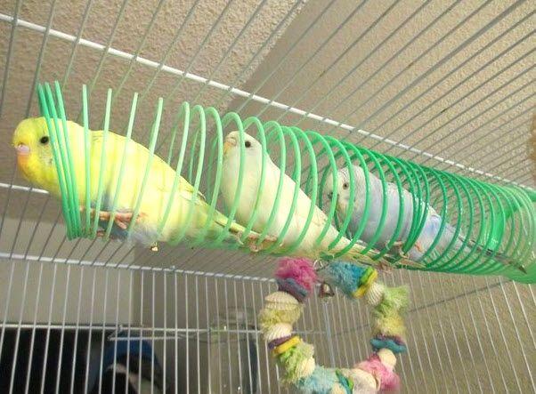Slinky Bird Perch - petdiys.com
