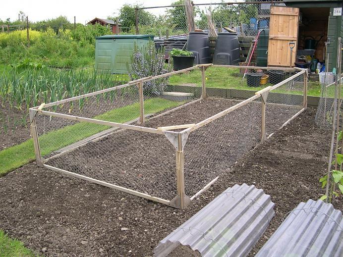 Brassica cage allotment ideas pinterest for Garden allotment ideas
