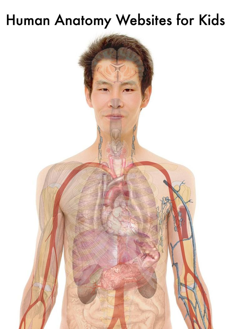 9 Best Organ Images On Pinterest The Human Body The Body And