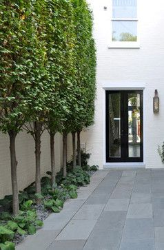 European Hornbeam Tree Design Ideas, Pictures, Remodel, and Decor - You would use flat-plane pleached hornbeams in this situation.