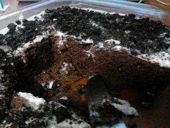 Oreo poke cake #recipes