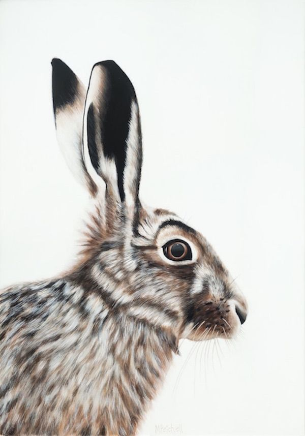 Clive the Hare Latest animal painting by Margaret Petchell #portrait, #animal #hare #bunny #fur #Rabbit