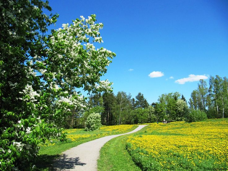 There is nothing great in this photo as a photo only, but it surely it is a reminder how beautiful country and city (Helsinki) I live in: today on a bike trip to grocery store scent of blossoming hagberry trees all around with dandelions colouring nearby fields. And Sun shining in the clear sky :)