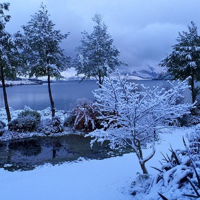 The view from my kitchen window in Wanaka – my garden under a thick blanket of snow...