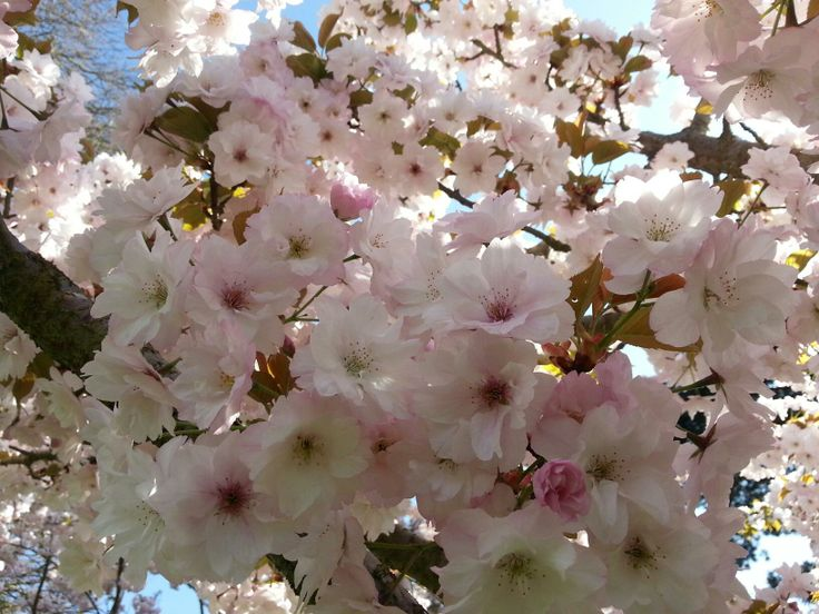 Spring blossom was exceptionally beautiful in 2014