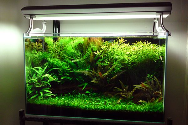 Fish tank ideas keeping dwarf shrimp in the planted for Shrimp fish tank