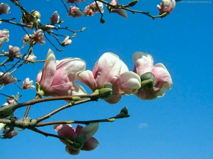 Bilder på skrivbordet - Våren: http://wallpapic.se/naturen/varen/wallpaper-1279