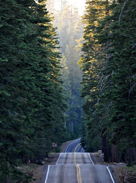 on the road again~Forests, The Roads, Country Roads, Beautiful, Open Roads, Trees, Lassen Volcanic, Places, Roads Trips