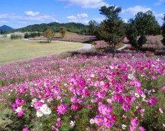国営讃岐まんのう公園秋はコスモスが楽しめます 高松市から車で45分くらい香川県仲多度郡まんのう町にある国営讃岐まんのう公園は四季を通じて季節の花を楽しめるところだけどこれからの季節はコスモス そして花だけじゃない楽しみ方もたくさんあるのです ふわふわドラ夢や大型ネット式ジャングルジムそしてかなり大きい滑り台エックスライダー 子供たちに大人気ですよ  犬もいっしょにってときは園内にドッグランが  園内はかなり広いのでサイクリングロードが整備されてるんだけど連tなる自転車もあっていろんな自転車がレンタルできるのです オートキャンプ場もあってこれから秋の季節にもいい感じ 体験やイベントもあるのでチェックしておくといいかも  今の時期はコスモスフェスタ 9月10日から開催中で11月3日まで 期間中の土曜日曜祝日は無料送迎バスが運行しているそうですよ  車で来るときは駐車場代が普通車で310円かかります 入園料は大人410円  秋の涼しくなった今ドライブで行っておきたいところですね   うどんネット http://ift.tt/2cql01Q  公式…