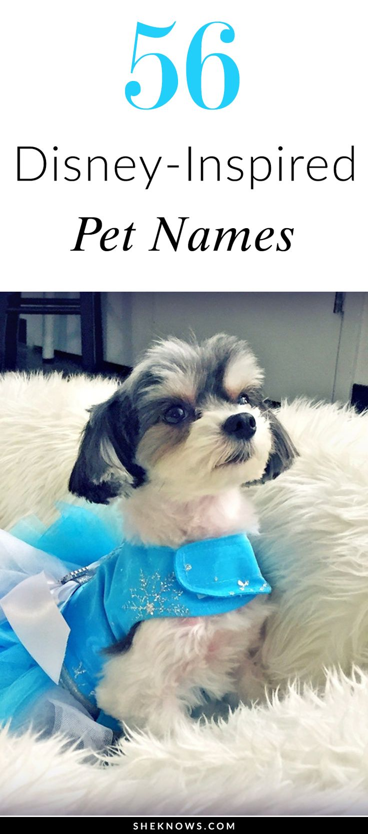 56 Disney-inspired names for your dog or cat.