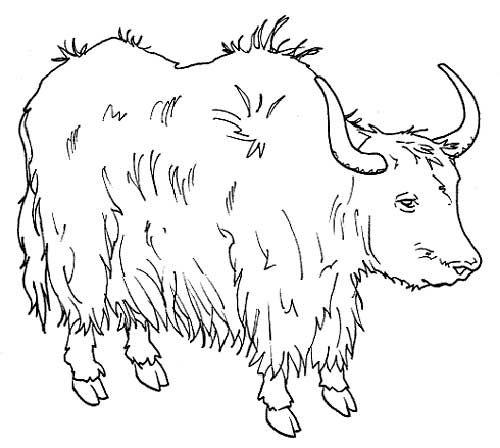 Mais Desenhos Http Colorindo Org Animais Selvagens Animais