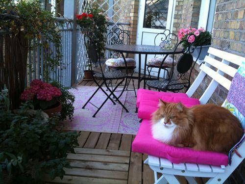 katt,balkong,rosa,matta,stolar,bord