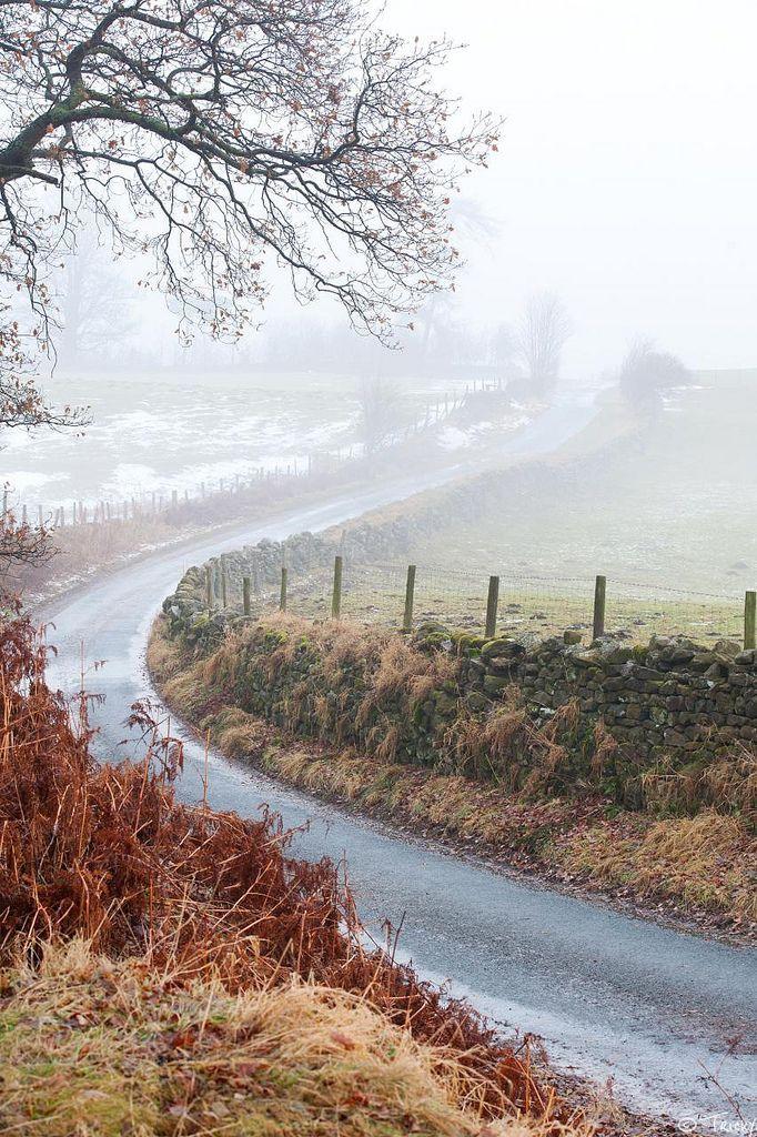 Foggy wintery lane, Masham, North Yorkshire (by tricky (rick harrison))