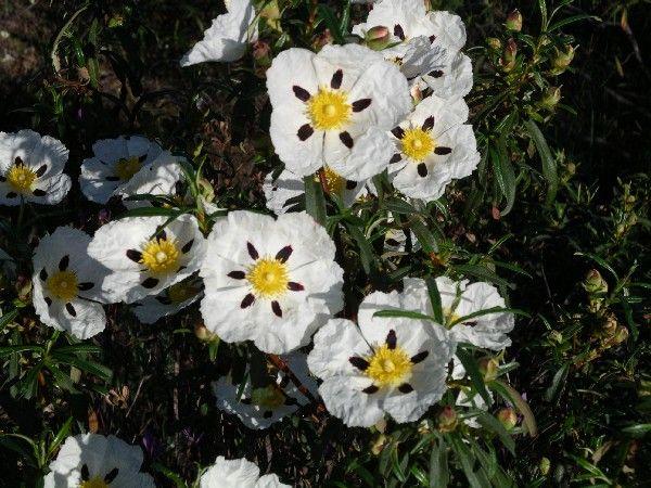 花コロンビア - ボゴタ、メデジン、カリ、バランキージャ、カルタヘナの自宅に花:野の花。