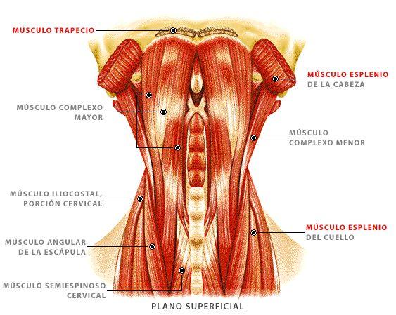 Si pueden estar enfermos los bordes de la osteocondrosis