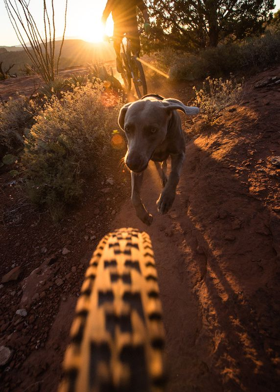 Mountain biking around Sedona, Arizona with a few locals and their dogs.