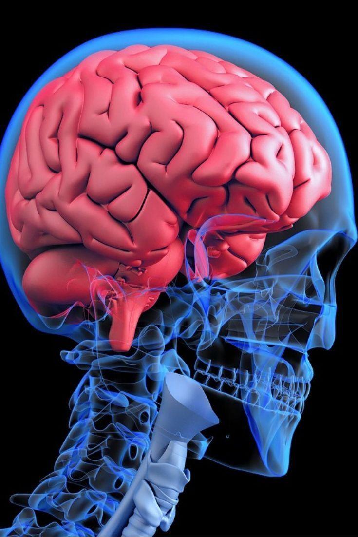 縁 系 辺 大脳
