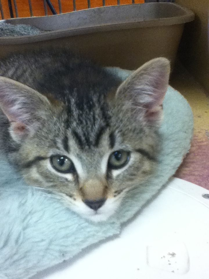 Cute Kitten At Petsmart Cuteeee Creatures Pinterest