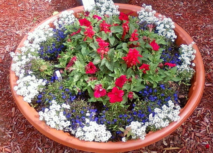 Wick Gardening In Shallow Containers. Use A Plastic Kiddie Pool!