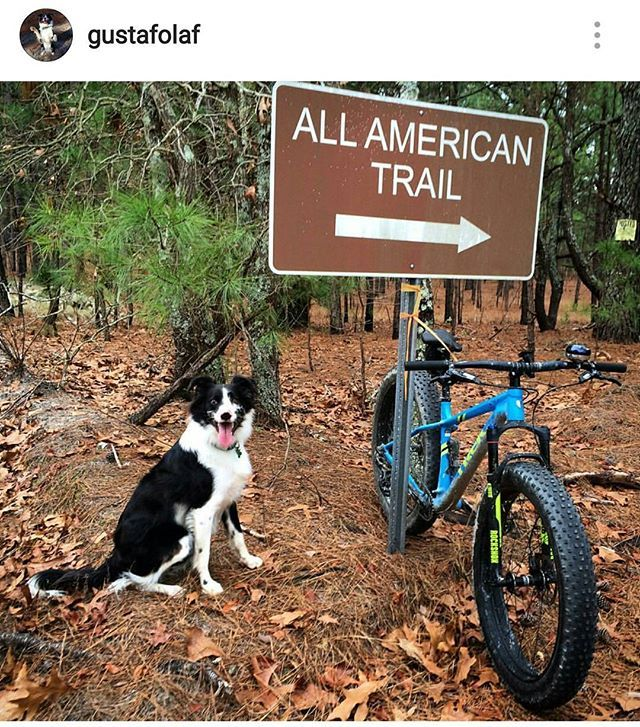 @gustafolaf loves running through the woods while his mom pedals alongside. seems like one of the coolest dogs around!  @gustafolaf  @gustafolaf  @gustafolaf  @gustafolaf  #fatbikefriday  #fatbike #fatty #fatboy #specialized #surly #specializedfatboy #salsa #mukluk #bucksaw #onone #scottbikes #907 #khs #trek #mtb #mtber #downhill #freeride #mountainbike #dogsofinstagram #bordercollie #sheepdog #pup #olaf