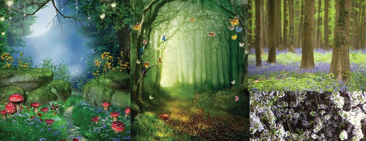 Magische bos