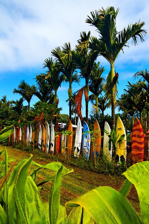 Maui Surfboard Fence, Hawaii