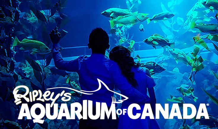 Visit Ripley's Aquarium and immerse yourself in a world of 16,000 aquatic animals and discover your own underwater adventure at Ripley's Aquarium of Canada!