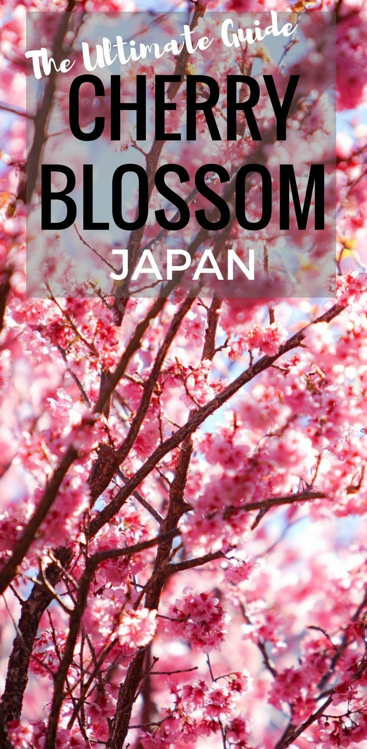 Best Time To Visit Japan For Cherry Blossoms 2020