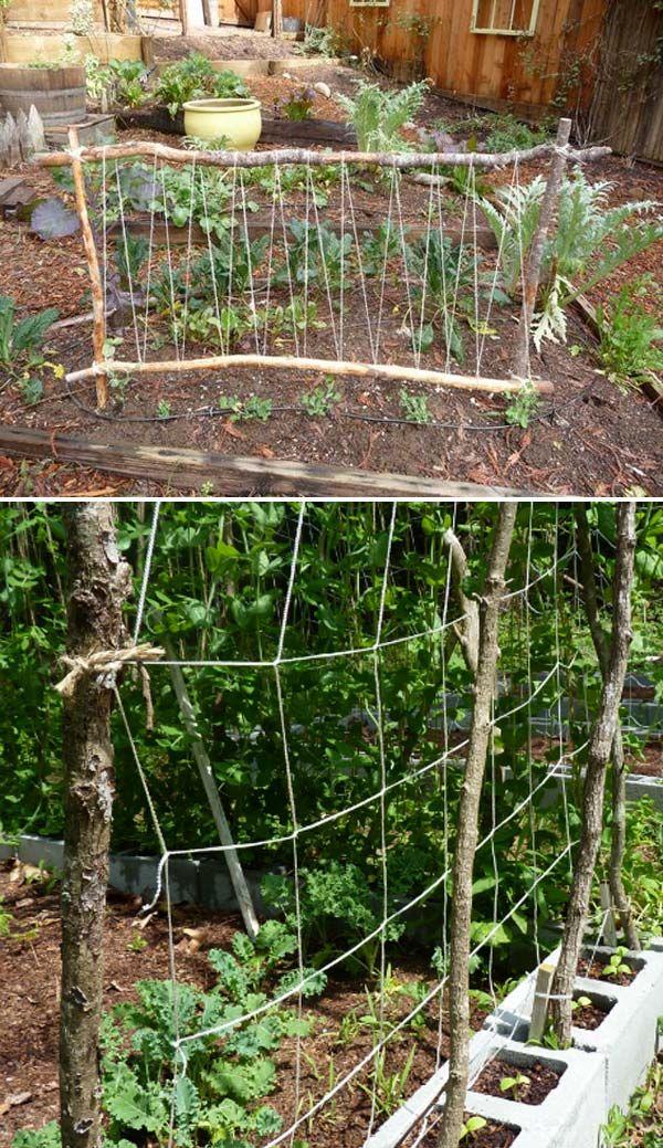 19 erfolgreiche Wege zum Bau von DIY Spalieren für Gemüse und Obst