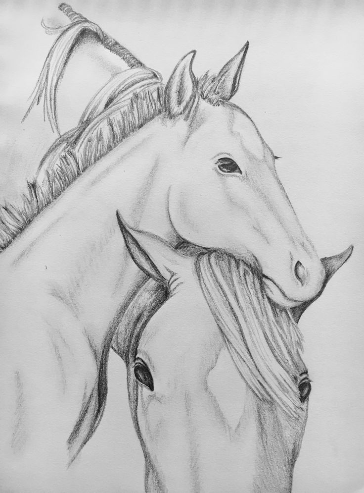 Mare & Foal - Charcoal Pencil
