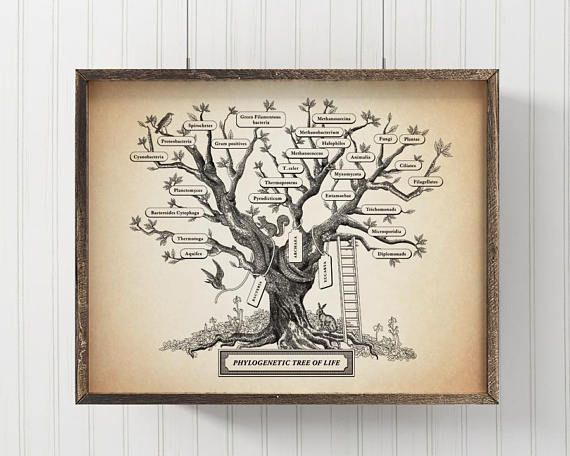 Microbiology Phylogenetic Tree Of Life Poster Science art