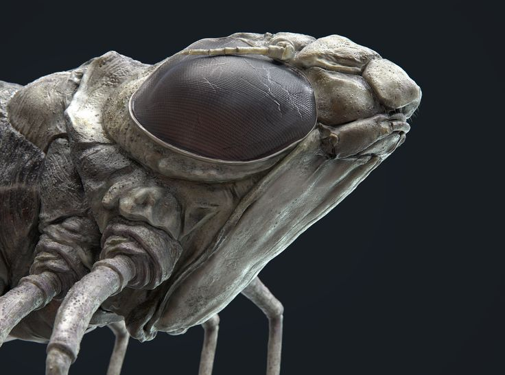 Dragonfly Nymph by David Schultz | Creatures | 3D | CGSociety