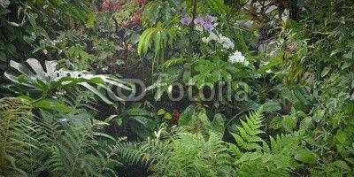 Fototapety dżungla. tripiki, tropikalny las