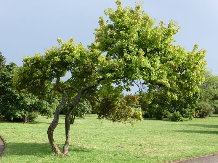 I found this amazingly sharpening tree in one city park. Beautiful inspiration for taking an unforgettable picture.