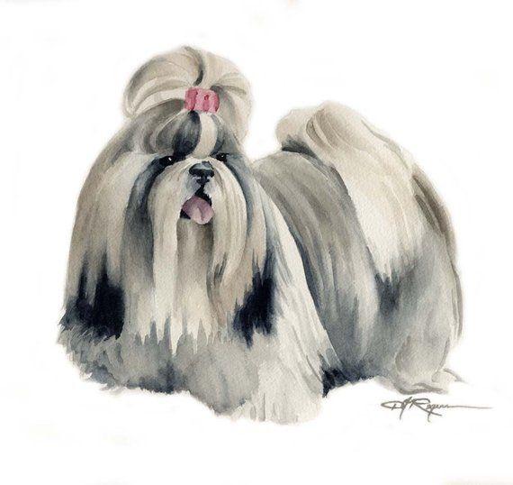 Shih Tzu Art Print By Watercolor Artist Dj Rogers Art Prints