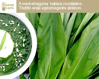 Olvass többet a medvehagyma jótékony hatásáról. herbcaps.com facebook.com/HERBCAPSMagyarország