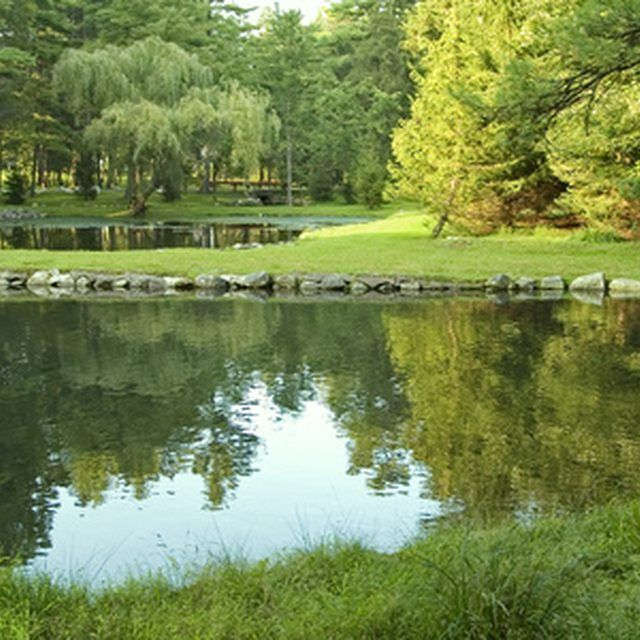 44 best images about pond ideas on pinterest building a for Farm pond maintenance