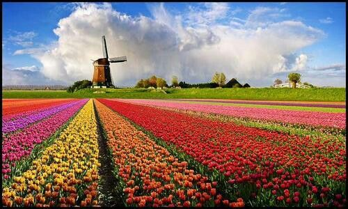Would love to see the Tulips in Holland.