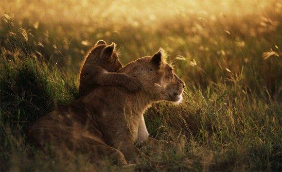 lion-mother-and-cub-hug