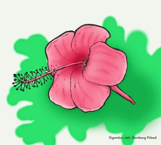 13 Gambar Lukisan Bunga Kembang Sepatu Di 2020 Kembang Sepatu