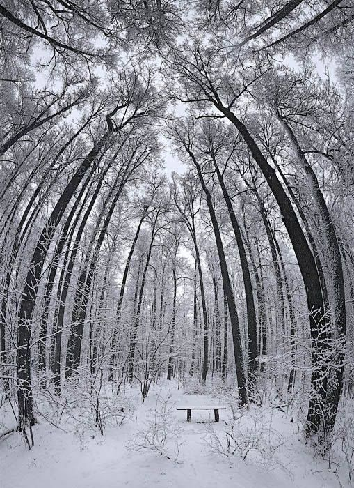 Сергей Семенов....Кусково. Зимний парк | Зимние деревья ...