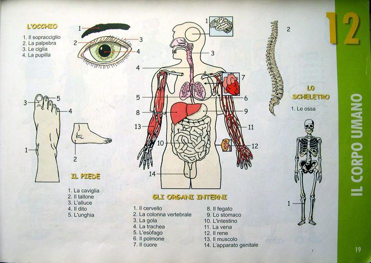 Pag 15 Il corpo umano