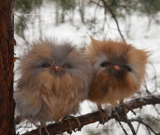 Fluffy Baby Owls...look like little Gremlins