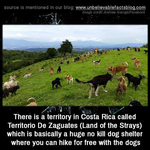 There is a territory in Costa Rica called Territorio De Zaguates (Land of the Strays) which is basically a huge no kill dog shelter where you can hike for free with the dogs