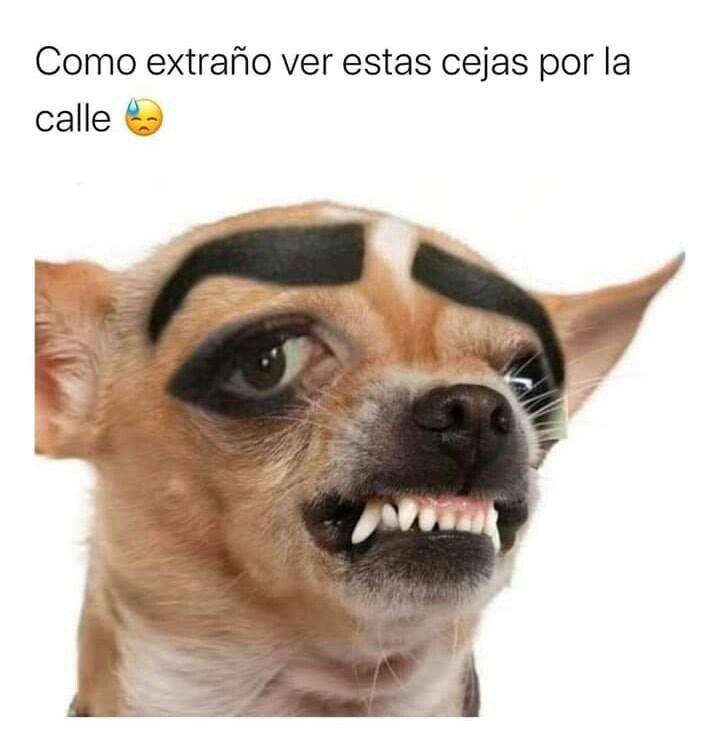 Pin De Camila Calderon En Memes V 2 Memes De Animales Divertidos Perros Graciosos Perros