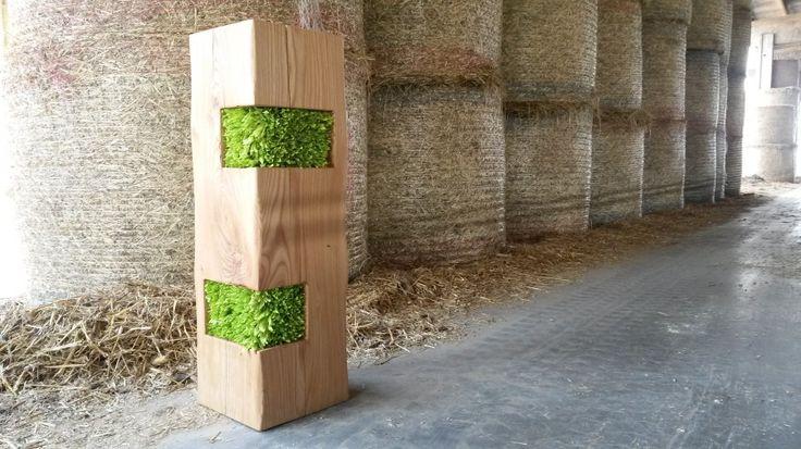 Elm Trunk with stabilized plants by LinfaDecor #design | #wood #trunks #stool #table #tronco #tavolo #sgabello #legno #tronchi