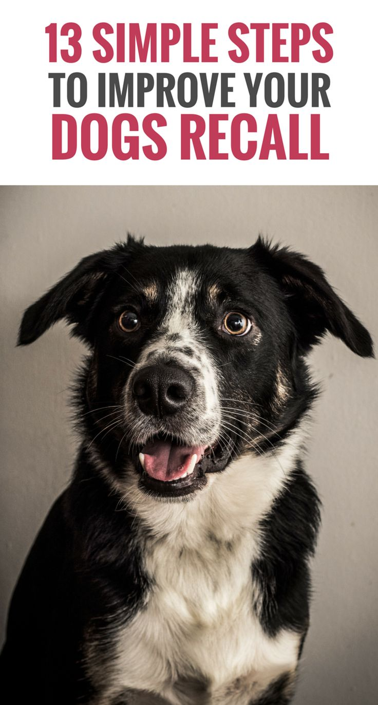 best dog training images on pinterest doggies pets and kisses