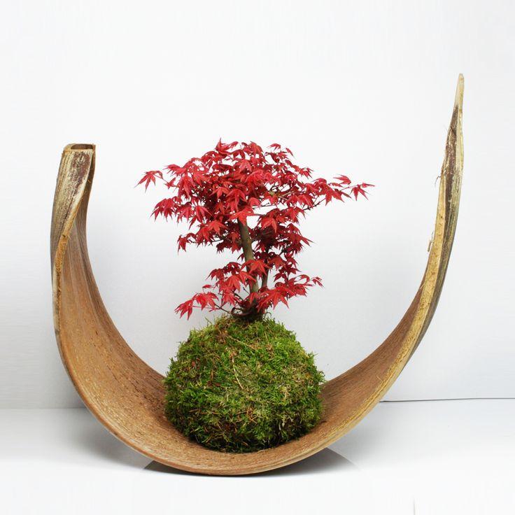 852 best florale deko images on pinterest art floral. Black Bedroom Furniture Sets. Home Design Ideas