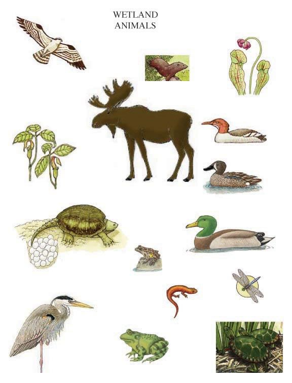 Wetland habitat animals - Use to make Go Fish games or ...